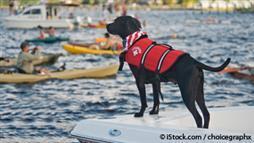 Paseos en Bote con Perros