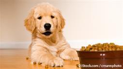 pet food lawsuit