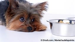 pets bland diet