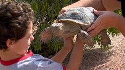 Hundreds of Captive Desert Tortoises Need Homes