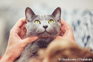 Como Acariciar Gatos