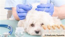 pet acupuncture treatment