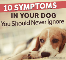 10 symptoms you should never ignore on dogs