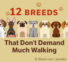 12 Breeds That Don't Demand Much Walking