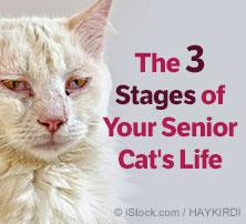 Cat Senior Life