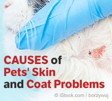 Pet Skin and Coat Problems