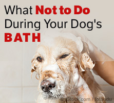 How to bathe a dog easily what not to do during dogs bath dog bath solutioingenieria Images