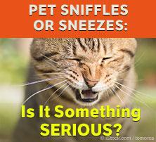Pet Sniffles or Sneezes