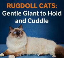 Rugdoll Cats
