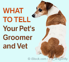 What to Tell Your Pets Groomer and Vet