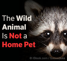 Wild Animal Is Not a Home Pet