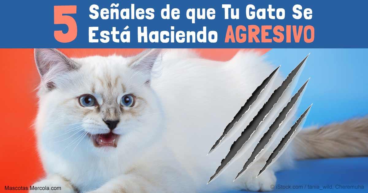 5 Señales de Que Tu Gato Se Está Volviendo Agresivo