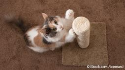 Your Cat Is Far More Trainable Than You Think - Here's Proof