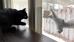 Squirrel Outside Antagonizes Cats Inside