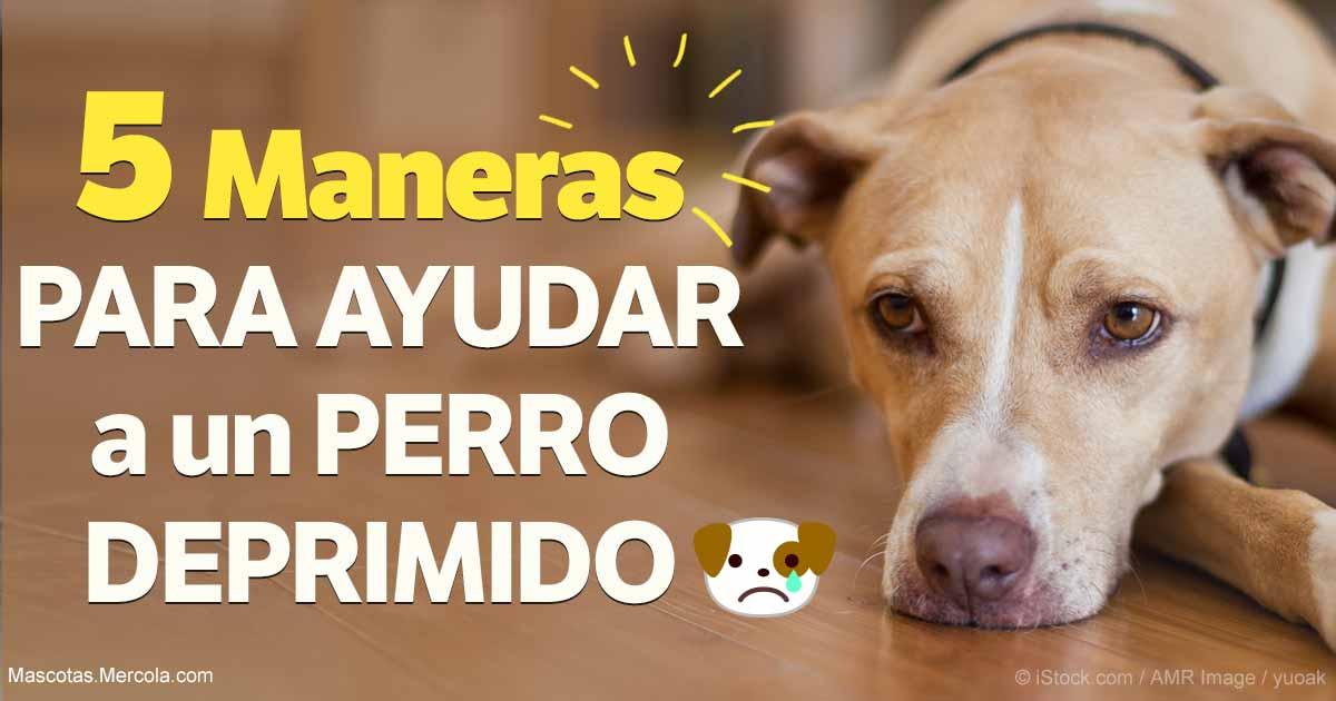 Tu Perro Esta Triste 5 Estrategias Para Alegrar A Tu Cachorro