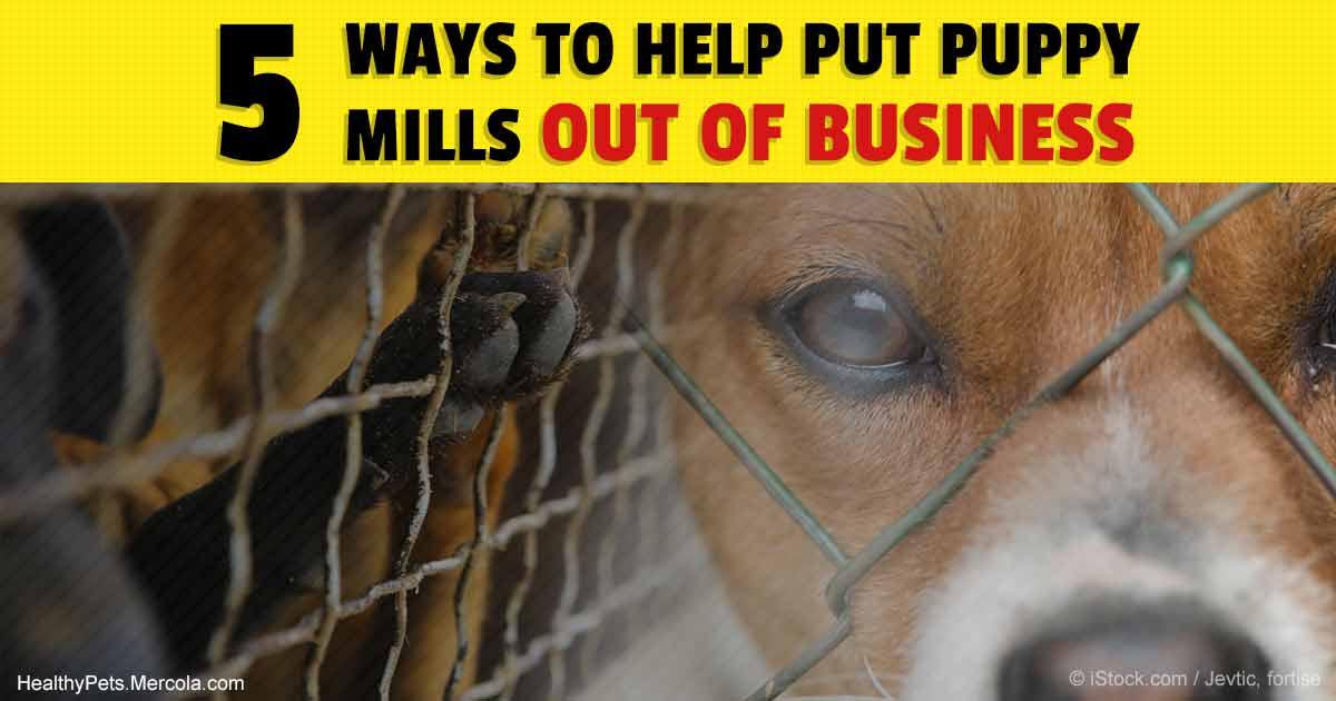 puppy mills essay