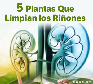 5 Plantas Que Limpian los Riñones