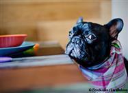 Alimentos Humanos Tóxicos y Fatales Para las Mascotas
