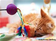 Las 11 Razas de Gatos Más Juguetones