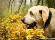 ¿Tendrá Tu Mascota Geriátrica una Buena Calidad de Vida?