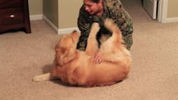 Dog Is Excited When His Marine Mom Comes Home