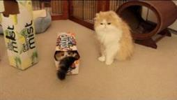 Choco Ball and the Pop Can Box