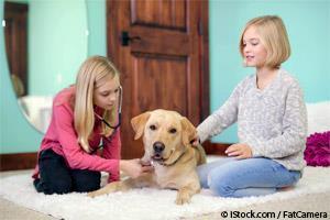 DIY dog checkup