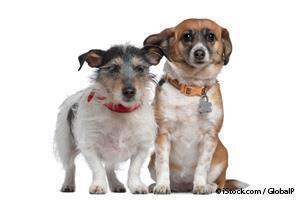 dogs genetic diseases