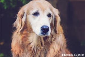 Enfermedades Comunes en Perros Adultos