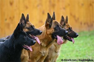 Enfermedades Genéticas en Perros