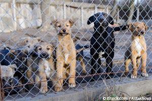 Fábricas de Perros