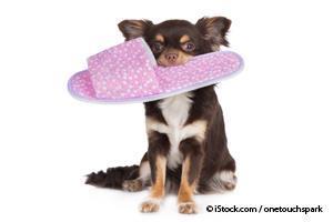 Comportamientos Riesgosos en Perros