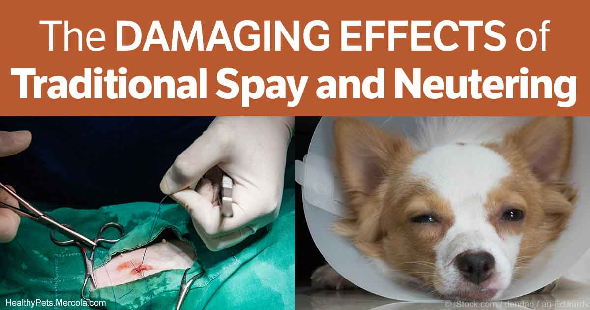 When Should I Get My Dog Spayed Uk
