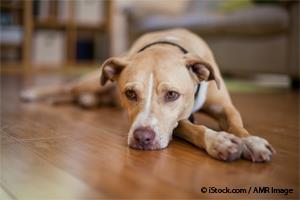 Perro con Depresión