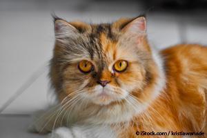 Problemas de Salud Comunes en los Gatos