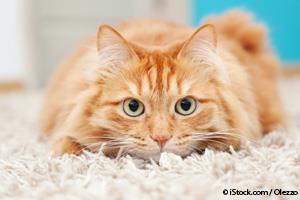 Rompecabezas de Comida Para Gatos