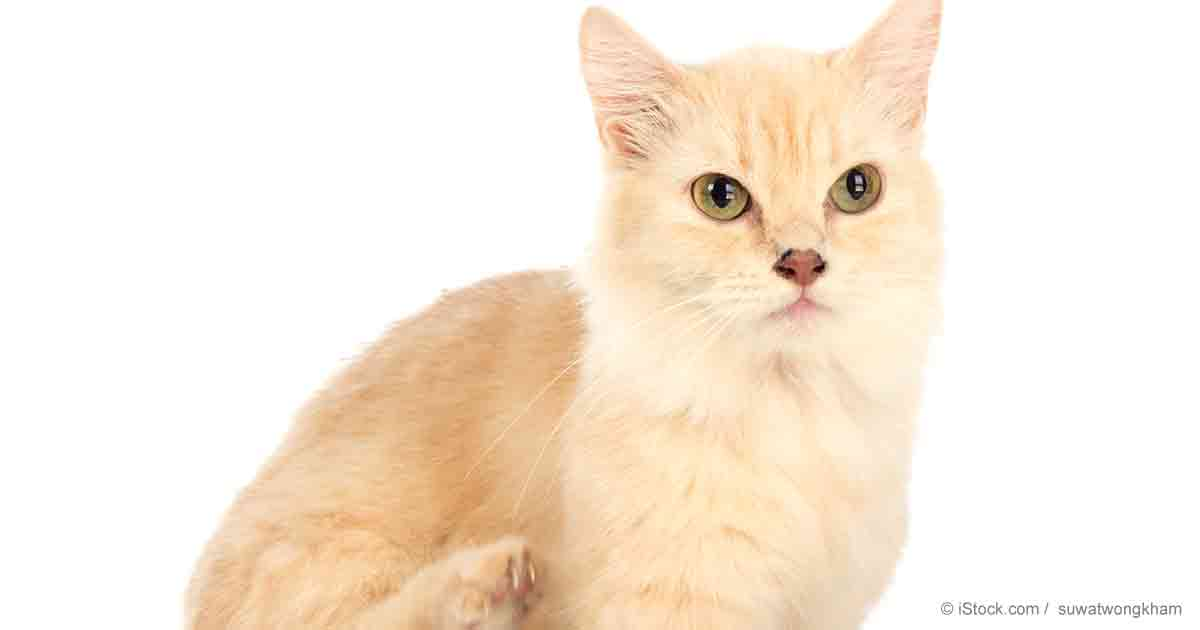 Mercury Free Cat Food