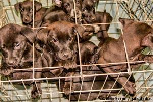 Help Put an End to Puppy Mills Every Time You Do This