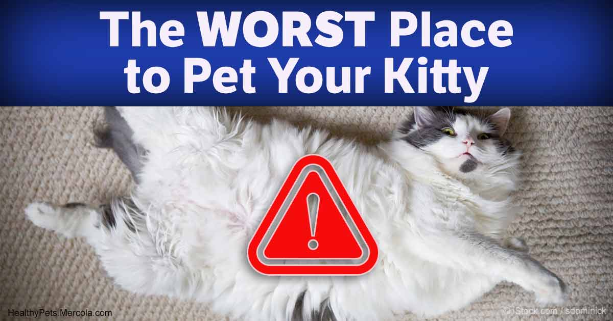 how to get your cat to stop peeing inside