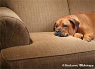 5 Signs of Pain That Owners Often Overlook - Are You Missing Them?