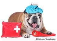 pet safety disaster kit