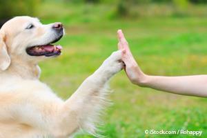 Perros Anhelan los Elogios