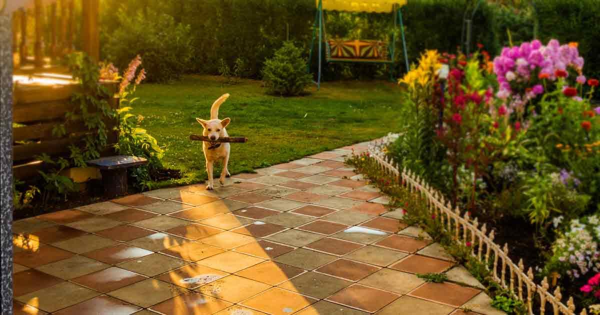 C mo crear un hermoso jard n apto para perros - Como hacer un jardin hermoso ...