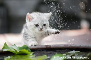 Cuando Tu Gato Vuelca Su Tazón de Agua en el Suelo, Esto es lo Que Te Está Diciendo