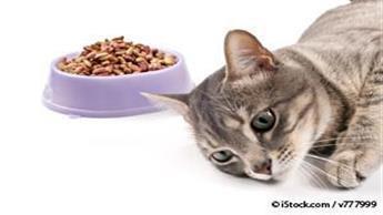 feline hepatic lipidosis