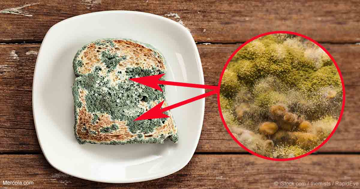 Eating Green Moldy Food