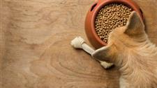 grain free pet foods