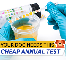 Dog Urinalysis