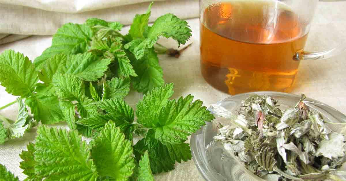 Best raspberry leaf tea