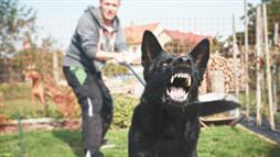 New Study Sheds Light on Canine Aggression